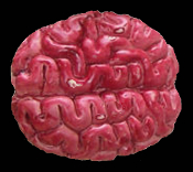 Zombie Food HUMAN BRAIN Morgue Organ Body Part Halloween Prop Horror Decor CREEPY GAG GIFT DECORATION BLOODY BANQUET BUTCHER CHOP SHOP (Slightly Smaller than Life Size) Looks so real, packaged right from the Undertakers Lab!