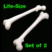 Life Size Realistic Reproduction 4th Quality SET of 2 BUCKY FEMURS SKELETON BONES Human Anatomy Wholesale Discount Cheap Halloween Prop Building Walking Dead Zombie Pirate Theme Gothic Decor. Durable, heavyweight, solid cast plastic resin.