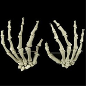 Need a hand without spending an arm and a leg? Realistic life size Budget BUCKY SKELETON HANDS PAIR BONES. Human Anatomy Cheap Halloween Prop Building Supplies. Walking Dead Zombie Graveyard Pirate Theme Gothic Decor. Set of Right and Left Hand.