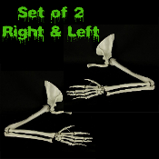Realistic pair life size BUCKY SKELETON ARMS w-HANDS-Human anatomy bones cheap DIY haunted house Halloween props building zombie pirate gothic decor. Ghoulishly gruesome, castle dungeon indoor outdoor cemetery graveyard display! Set: Right, Left.