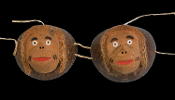 Funny Luau COCONUT MONKEY BRA BIKINI TOP Hawaiian Tropical Island Hula Girl Skirt Cosplay Halloween Costume Accessory Graduation Beach Pool Pirate Birthday Party Theme Tiki Bar Fancy Dress-ADULT UNISEX-Nutty Hysterical Gag-Real Hand carved Shells!