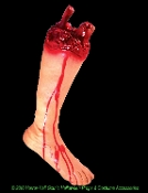 Realistic life size gory flesh-tone bloody human adult RIGHT leg prop with foot, cut off just below knee. Fake body part with hand painted blood on soft squishy foam-filled PVC appendage for added realism. Features protruding tibia and fibula bones.
