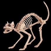 Oh, no! Morris is DEAD? Life Size Realistic Creepy KITTY SKELETON CAT Prop Building Decoration. Feline ZOMBIE BONEZ Hungry Skeletal Walking Dead inspired attack Cat frightens unsuspecting guests at Halloween costume party or Haunted House. 18-inch