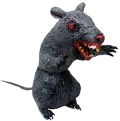 Creepy Giant Latex Sitting Evil Rat is a jumbo size Halloween prop decoration. Ferocious looking hungry demon rodent is ready to attack from his haunted house hideout! Scary enough for your mad scientist laboratory. Approx 10-inch tall.