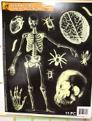 Gothic Human Anatomy SKELETON SKULL BONE BRAIN CLING Doctor Nurse Medical Theme Mad Doctor Butcher Chop Shop Meat Market Halloween Horror Haunted House Prop Building Window Tattoo Mirror Sticker Car Decal Body Parts Decorations