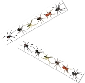 Spooky Arachnophobia SPIDERS PARTY TAPE-Fright Caution Police Barricade Tape Warning Sign Border Ribbon Banner Halloween Costume Party Creepy Indoor Outdoor Haunted House Prop Decoration. Colorful printed assorted species of scary realistic Arachnids