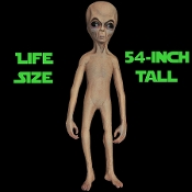 Science fiction fan or movie prop collector? Deluxe high quality LIFE SIZE GRAY ALIEN Latex prop is a great addition to any collection, Halloween costume party decoration or haunted house display! Roswell Area 51 UFO X-Files inspired humanoid.
