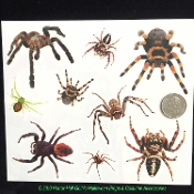 Realistic Arachnophobia TARANTULA SPIDERS TEMPORARY FAKE TATTOOS-Creepy Critter Gothic Punk Cheap Halloween Cosplay Costume Accessories-Scary Gross Bugs Horror Makeup Special Effects FX-Spooky, Zombie, Day of the Dead, Mardi Gras Decoration-ONE SHEET
