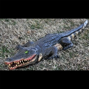 Realistic 4-Ft Long SWAMP ALLIGATOR PROP Vinyl Over Squishy Poly Foam. Perfect Luau Decoration, Mardi Gras, Pirate themed Birthday party, haunted house Halloween event. Scary large size lizard Gator Crocodile Jungle wild animal yard garden decor.