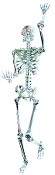 5-Ft CHROME POSE N STAY SKELETON Lighted LED Eyes Life Size Prop