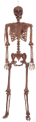 5Ft Life Size DECAYED POSE-N-STAY SKELETON Halloween Horror Prop