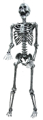 5Ft STEEL GRAY LIGHTUP SKELETON Steampunk Halloween Prop LED Eye