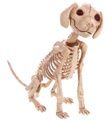 Cute SKELETON PUPPY SITTING CRAZY BONEZ House Pet Halloween Prop