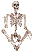 LIFE SIZE POSE N STAY SKELETON POSABLE Halloween Prop Decoration